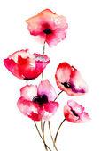 Haşhaş kırmızı çiçekler — Stok fotoğraf