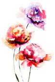 Flor peonía hermosa — Foto de Stock