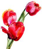 Three Tulips flowers — Stock Photo