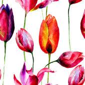 郁金香花的水彩插图 — 图库照片
