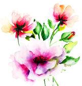 Original Summer flowers — Stock Photo