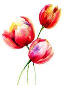红色的郁金香 — 图库照片