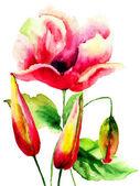 Originale fiori estivi — Foto Stock