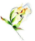 Decorative white flower — Foto Stock
