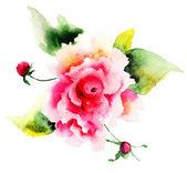 Beautiful Roses flowers — Stock Photo