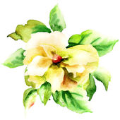Beautiful Yellow flower — Stock Photo