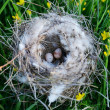 Bird nest with eggs - Stock Photo