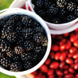 Blackberry harvest collecting — Stock Photo #13335557
