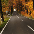 Road in forest, autumn — Stock Photo