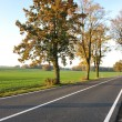 Country road, beautiful scene — Stock Photo