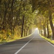 Country road in morning — Stock Photo #21352007