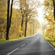 Country road in morning — Stock Photo