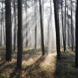 Mystic forest, sun rays entering trough the fog — Photo