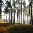 Mystic forest, sun rays entering trough the fog in the morning — Foto Stock