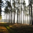 Mystic forest, sun rays entering trough the fog in the morning — Stok fotoğraf