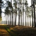 floresta mística, sol raios entrando no cocho a neblina da manhã — Foto Stock