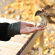 Feeding the birds in park, seed in hand — Stockfoto