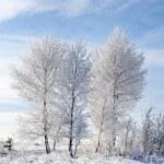 Sky, tree and snow — Stock Photo