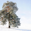 Sky, tree and snow — Foto Stock
