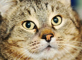 Cat, closeup — Stock Photo
