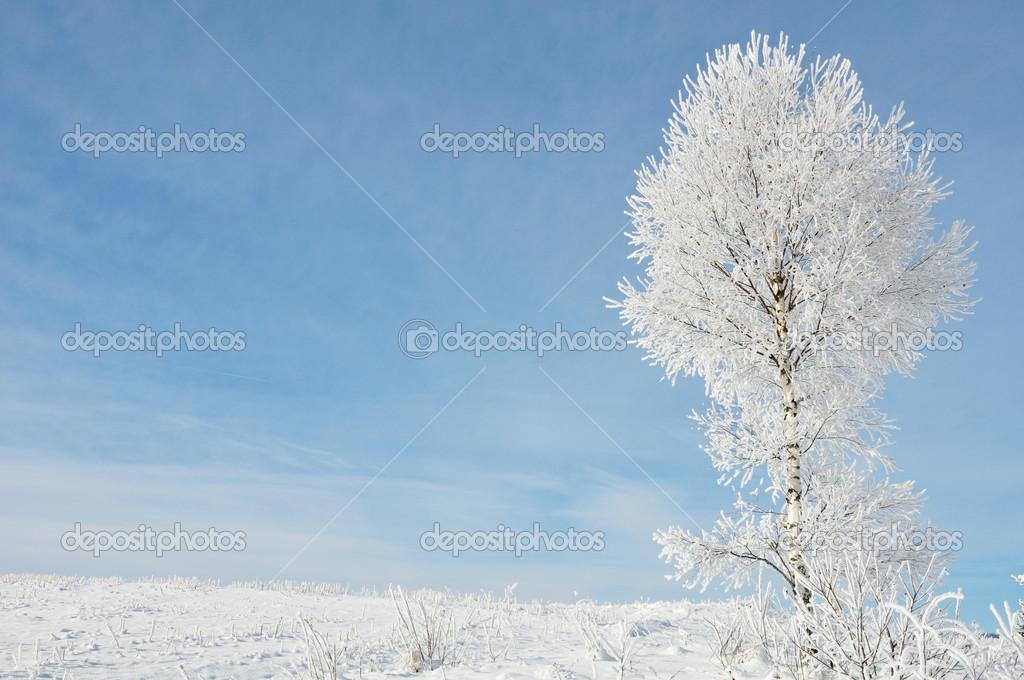 冬天风景— 照片作者 zurijeta