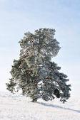 Tree alone — Stock Photo
