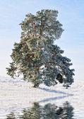 Tree on lake — Stock Photo