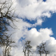 Bare tree branches against a cloudy sky — Foto Stock