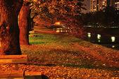 Street lamps illuminating garden — Stock Photo