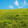 Beautiful adorable green meadow against the blue sky — Stock Photo