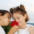 Beautiful scene of a boy and girl with rose — Stock Photo #21466763