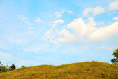 Beautiful background meadow against nice blue sky — Stock Photo