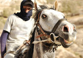 Closeup of a rider on horse — Stock Photo