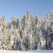 Winter snow covered fir trees on mountainside on blue sky background — Stock Photo #21491107