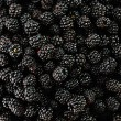 Blackberry harvest collecting — Stock Photo #21542639