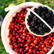 Blackberry harvest collecting - Stock Photo