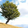 One tree and grass land — Stock Photo