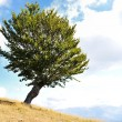 Stock Photo: One tree and grass land