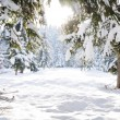 Winter beautiful scene tree and snow — ストック写真