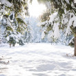 Winter beautiful scene tree and snow — Stok fotoğraf