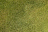 Artificial grass background — Stock fotografie