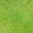 Grass background pattern — Foto de Stock