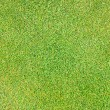 Grass background pattern — Foto Stock