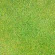 Grass background pattern — Stock Photo