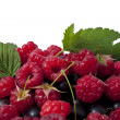 Currant and raspberry — Stock Photo