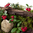 Cowberry — Stock Photo #31309515