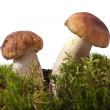 Stock Photo: Mushrooms