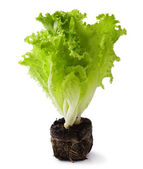 салат — Стоковое фото