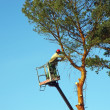 Tree lopper - Foto Stock