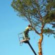 Tree lopper — Stock Photo